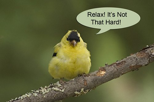 http://www.vividlight.com/40/images/02%20Gold%20Finch%20Relax.jpg
