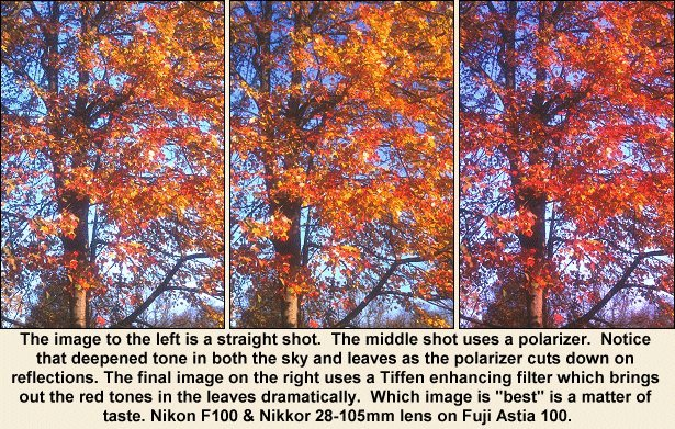 Leaves with and without filters